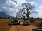 Baobab Tree, Uluguru mountains